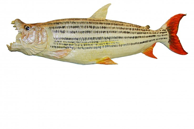 iso tigerfish2a